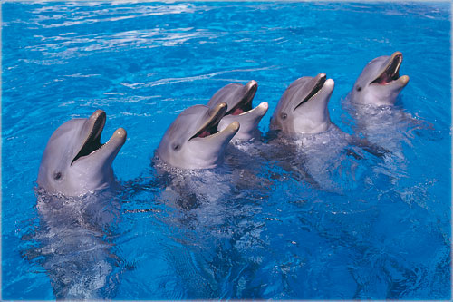 Island Of The Blue Dolphins Parks
