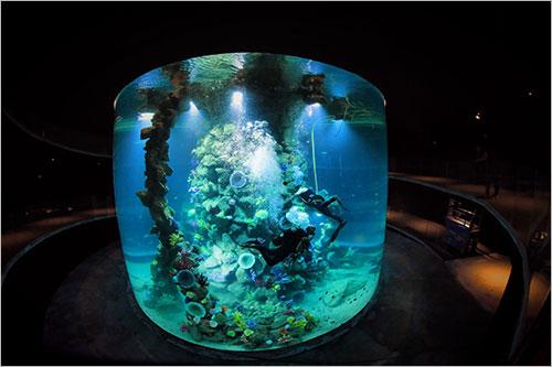 Gran canaria aquarium poema del mar for Aquarium poema del mar