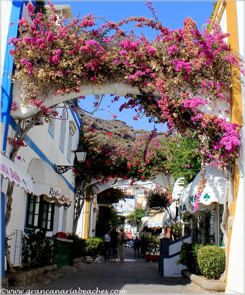 Hanging gardens in Mogan Gran Canaria